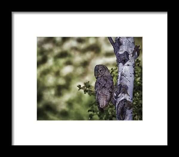 Great Grey Owl Framed Print featuring the photograph Grey Ghost by Elizabeth Eldridge