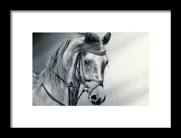 Horse Framed Print featuring the drawing Grey by Paul Archer