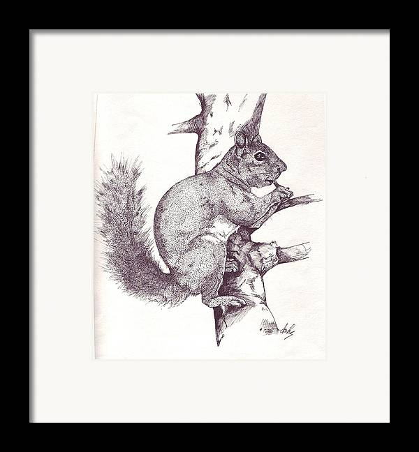 Squirrel Framed Print featuring the drawing Grey Squirrel by Debra Sandstrom
