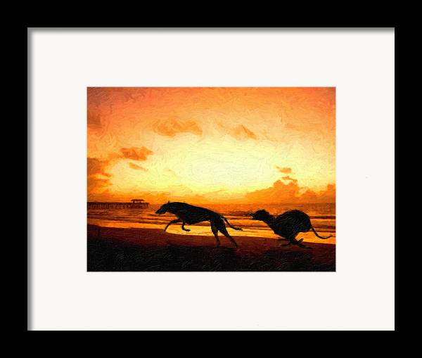 Greyhound Framed Print featuring the painting Greyhounds On Beach by Michael Tompsett