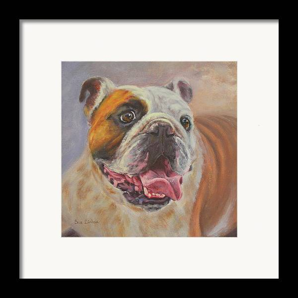 English Bulldog Portrait Framed Print featuring the painting Griff by Sue Linton