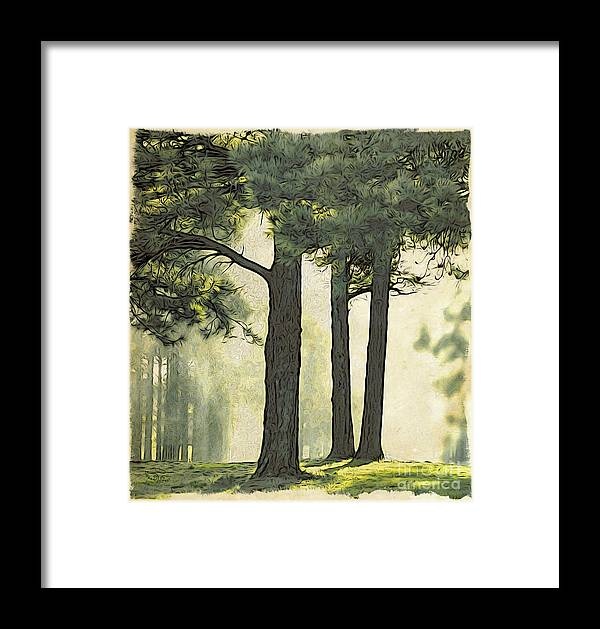 Fog Framed Print featuring the photograph Grimm's Forest by Beauty For God