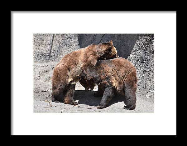 Grizzly Bear Framed Print featuring the photograph Grizzlies' Playtime 4 by Flo McKinley