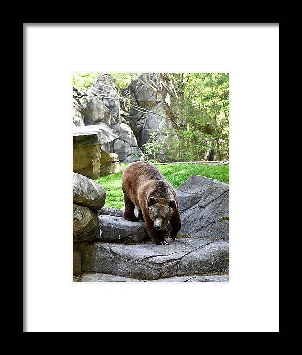Grizzly Framed Print featuring the photograph Grizzly by Sherri Johnson