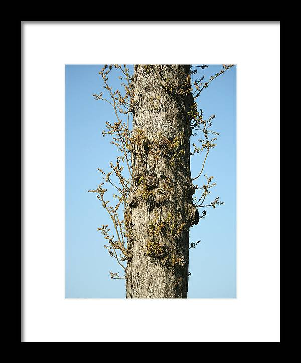 Tree Framed Print featuring the photograph Growing In All Directions by Magda Levin-Gutierrez