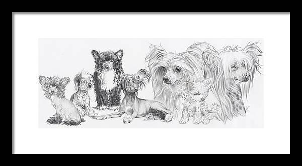 Toy Group Framed Print featuring the drawing Growing Up Chinese Crested And Powderpuff by Barbara Keith