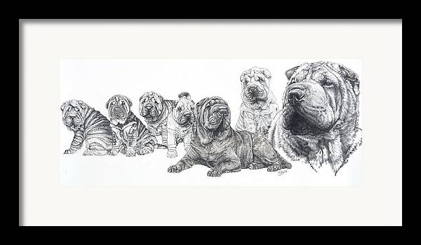 Non-sporting Group Framed Print featuring the drawing Growing Up Chinese Shar-pei by Barbara Keith