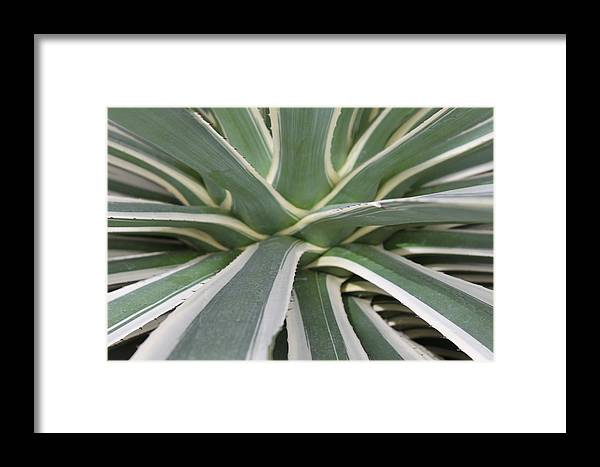 Nature Framed Print featuring the photograph Growth by Munir Alawi