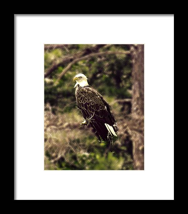 Eagle Framed Print featuring the photograph Guardian by Ken Gimmi