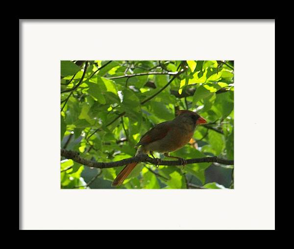 Female Framed Print featuring the photograph Guarding Mom by Kim