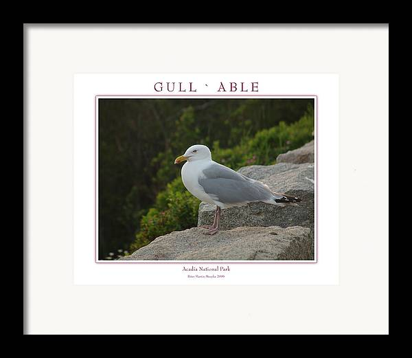 Landscape Framed Print featuring the photograph Gull Able by Peter Muzyka