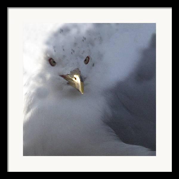 Sea Gull Framed Print featuring the digital art Gull by Tom Romeo