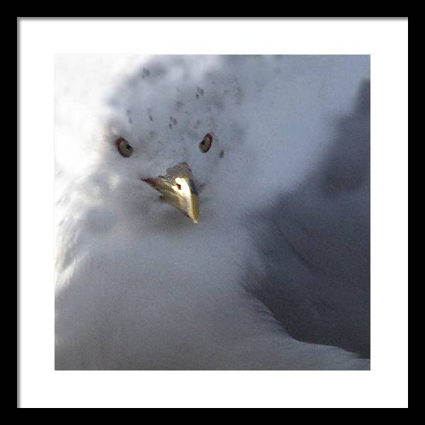 Sea Gull Framed Print featuring the digital art Gull by Tom Romeo