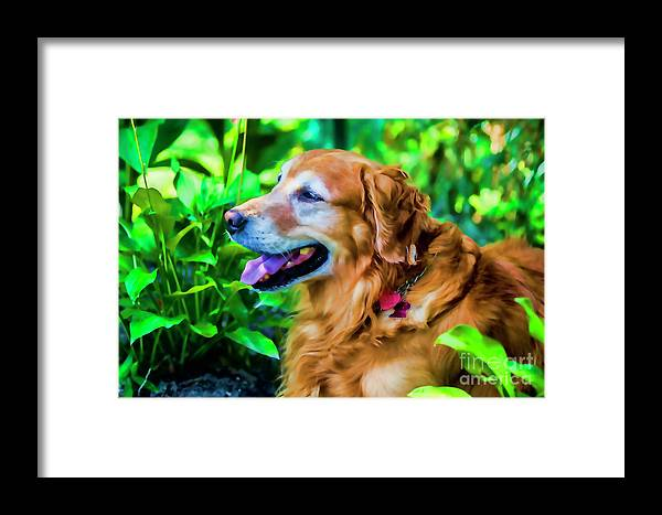 Gus Framed Print featuring the photograph Gus In Flower Bed 10357t2a by Doug Berry