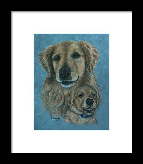 Golden Retriever Framed Print featuring the drawing Gussy Before And After by Debbie Stonebraker
