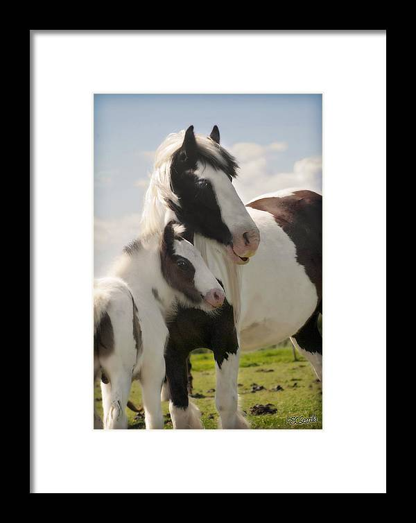 Gypsy Vanner Framed Print featuring the photograph Gypsy Mare And Foal by Elizabeth Vieira