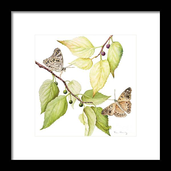 Butterfly Framed Print featuring the painting Hackberry Emperor Butterfly by Fran Henig