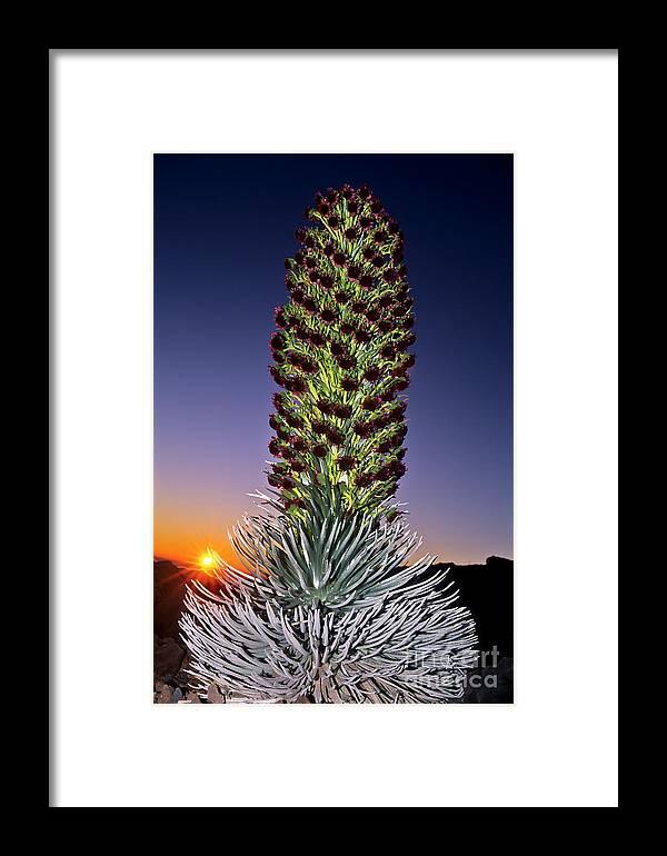 Sunrise Framed Print featuring the photograph Haleakala National Park Silversword Sunrise Maui Hawaii by Jim Cazel