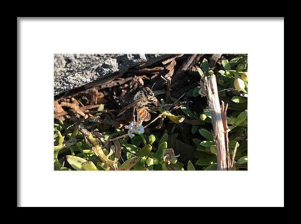 Photography Framed Print featuring the photograph Hang On Honey Bee by Shawn Brandon