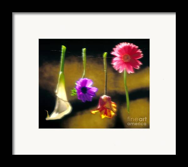 Tulip Framed Print featuring the photograph Hanging Flowers by Tony Cordoza