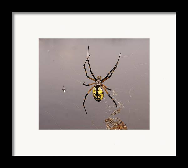 Spiders Framed Print featuring the photograph Hanging In There by Debbie May