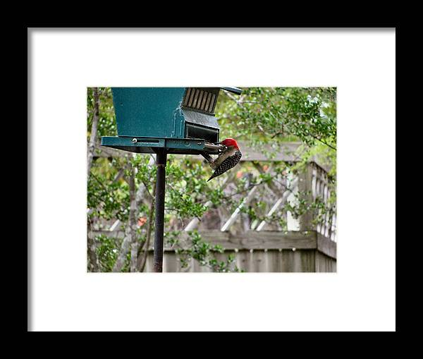 Bird Framed Print featuring the photograph Hanging On by Camera Candy