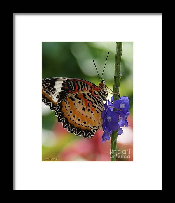 Butterfly Framed Print featuring the photograph Hanging On by Shelley Jones