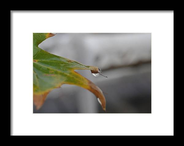 Leaf Framed Print featuring the photograph Hanging On by Tazz Anderson