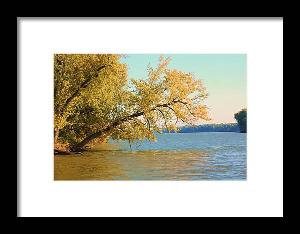 Tree Framed Print featuring the photograph Hanging Out by Jame Hayes