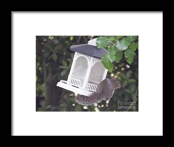 Nature Framed Print featuring the photograph Hanging Out by Linda Langston