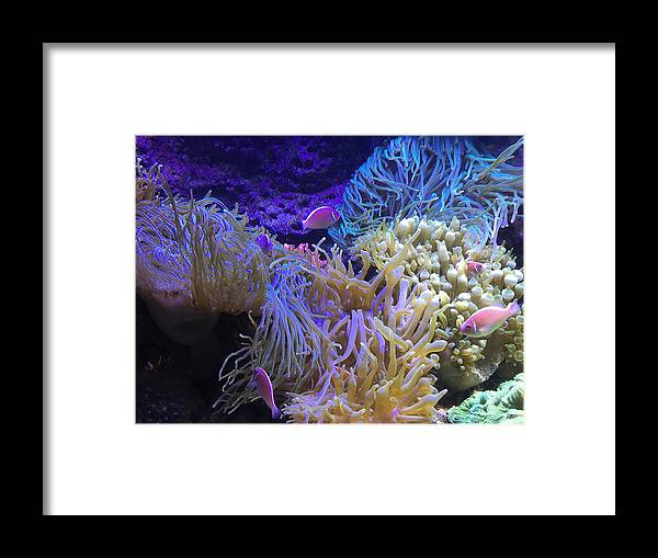 Photography Framed Print featuring the pyrography Hanging Out by Michael Lucarelli