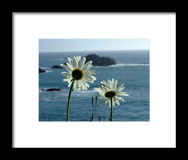 Daisy Framed Print featuring the photograph Happily Ever After by Donna Blackhall