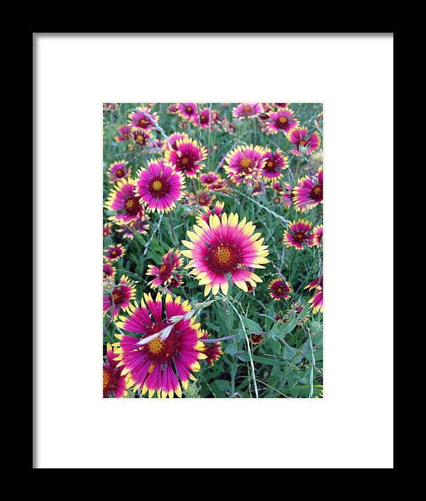 Flowers Framed Print featuring the photograph Happiness by Marie Millard