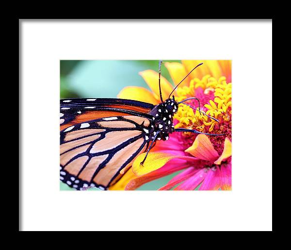 Butterfly Framed Print featuring the photograph Happiness by Mitch Cat