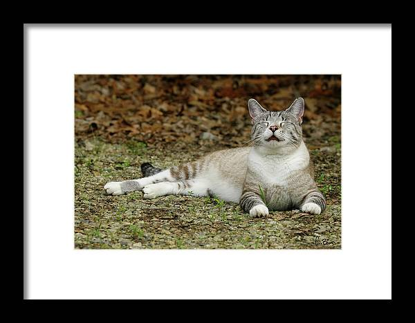 Photo Framed Print featuring the photograph Happy Cat by Cara Bevan