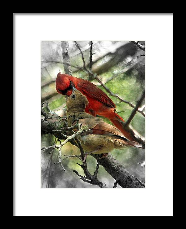 Cardinal Framed Print featuring the photograph Happy Fathers Day by Lisa Scott