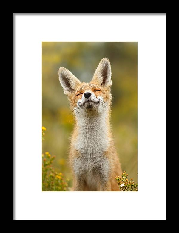 Red Fox Framed Print featuring the photograph Happy Fox by Roeselien Raimond