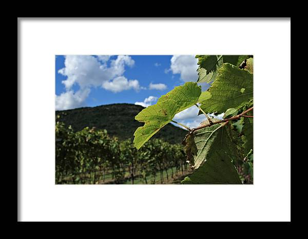 Utopia Framed Print featuring the photograph Happy Days by Laurette Escobar