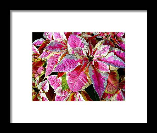 Christmas Framed Print featuring the photograph Happy Holidays by Mindy Newman
