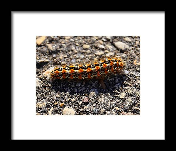 Caterpillar Framed Print featuring the photograph Happy by Melanie Guest