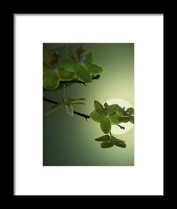 Inner Harmony Framed Print featuring the photograph Happy Moon by Nereida Slesarchik Cedeno Wilcoxon