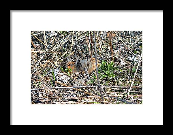American Woodcock Framed Print featuring the photograph Happy Mother's Day by Asbed Iskedjian