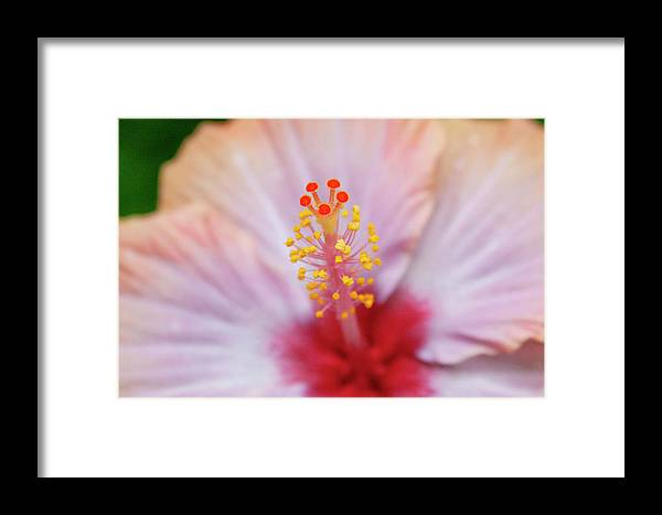 Floral Framed Print featuring the photograph Happy Orange by Toni Hopper