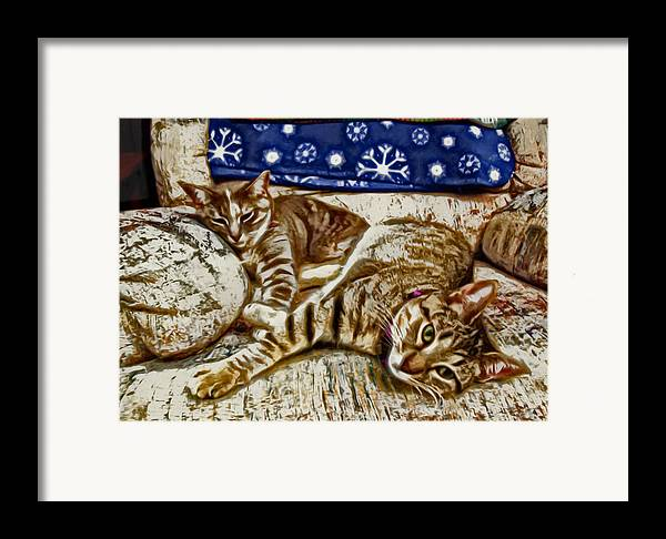 Cat Framed Print featuring the photograph Happy Together by David G Paul