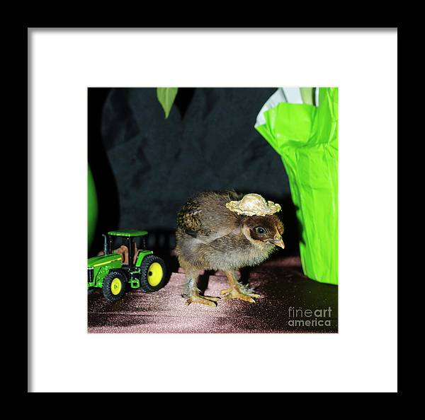 Chicken Framed Print featuring the photograph Hard Day Plowing by Donna Brown