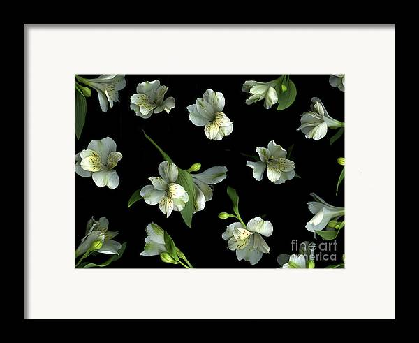 Scanography Framed Print featuring the photograph Harmony by Christian Slanec