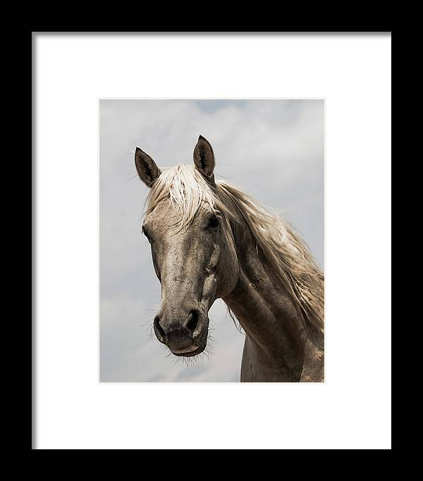 Framed Print featuring the photograph Harry's Gold by Kate Wiltshire
