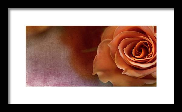 Rose Framed Print featuring the photograph Haunted by Rebecca Cozart