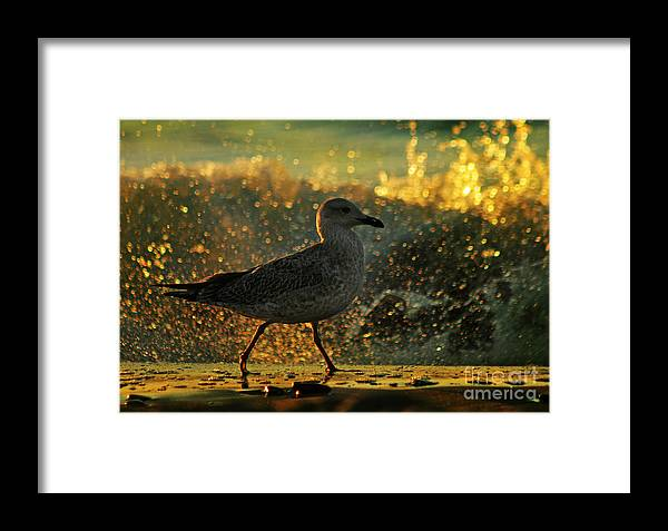Seagull Framed Print featuring the photograph Have A Walk By Th Sea by Angel Ciesniarska