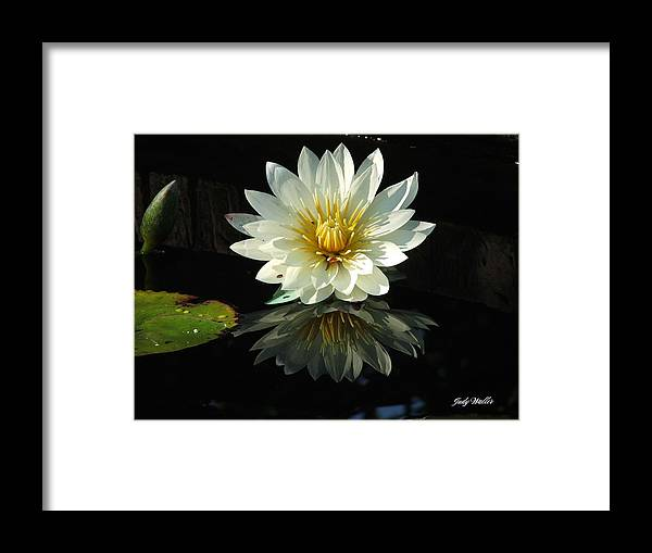 Flower Framed Print featuring the photograph Haven Hospice Water Lily by Judy Waller